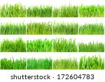 fresh green grass isolated on... | Shutterstock . vector #172604783