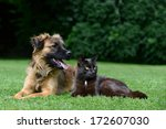 Stock photo dog and cat lying on meadow 172607030