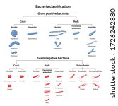classification of bacteria by...   Shutterstock .eps vector #1726242880