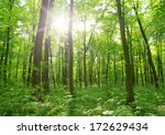 forest landscape in the morning | Shutterstock . vector #172629434