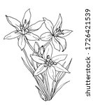 Star Of Bethlehem White Flower...