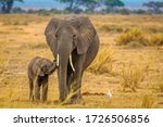 Elephant And Her Baby Walking...