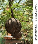 Coconut Shell Hanging Planter...