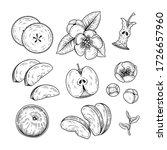 vector sketch apple decorative... | Shutterstock .eps vector #1726657960