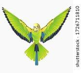 Green Bird  Flying Budgerigar...