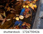 Cracked Chestnuts And Leaves I...