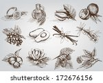 vector sketches natural... | Shutterstock .eps vector #172676156