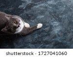 Grey Cat On A Dark Concrete...