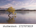 Famous Lonely Willow Tree In...