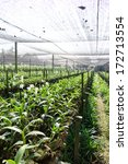 orchid farm | Shutterstock . vector #172713554