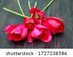 Red Tulips Lie On A Dark Woode...