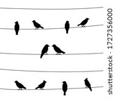 A Silhouette Of Birds On Wires. ...