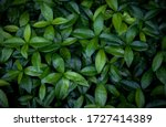 Foliage Of Vibrant Green Leaves ...