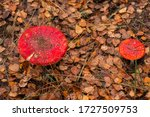 Two Red Poisonous Inedible...
