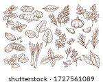 sketch illustration of spices... | Shutterstock .eps vector #1727561089