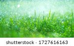 Grass With Rain Drops. Watering ...