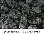 Leaf Macro Backgrounds. The...