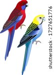 Vector Australia Parrots Pale...