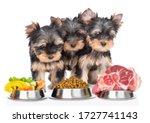 Yorkshire Terrier Puppies Look...