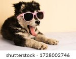 Cute dog in pink glasses