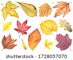 Autumn Leaves Collection....