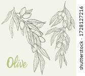 hand drawn vector olive set.... | Shutterstock .eps vector #1728127216