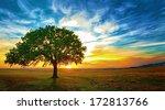 Oak Tree In A Beautiful Sunset...