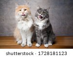 Funn Portrait Of Two Hungry...