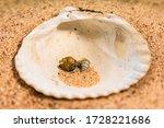 Three Small Seashells From...