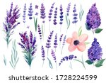 Set Of Set Of Flowers  Lilac ...