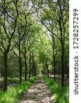 Walking Path In A Fresh Green...