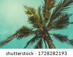 Vintage Coconut Tree...