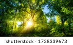 Small photo of Vivid scenery of beautiful sunlight in a lush green forest, with vibrant colors and pleasant contrast