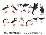 Set of atlantic puffin bird in different poses cartoon animal design flat vector illustration isolated on white background
