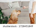 Little Girl Holding Dog Snack...