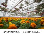 Beautiful Greenhouse With...