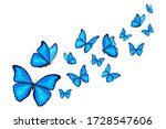 Blue Morpho Butterflies Fly On...