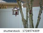 Red Cardinal Bird In Bird Hous...