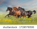 Thre Beautiful Horse Run Gallop ...