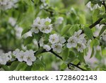 passion blossoms. apple tree... | Shutterstock . vector #1728602143