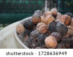 A Group And Lots Of Walnuts In...