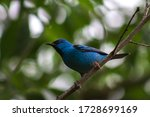 This Blue Bird Is Very Very...