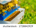 Collector Of Pollen On A Hive....