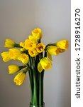 Yellow Narcissus  Daffodil ...