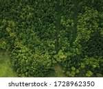 View Of The Green Forest From...