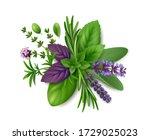bunch of fresh herbs de... | Shutterstock .eps vector #1729025023