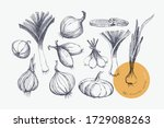 hand drawn large set of onions... | Shutterstock .eps vector #1729088263