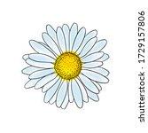 Beautiful Doodle Sketch Daisy...