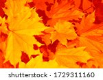 Blurred. Autumn Landscape With...