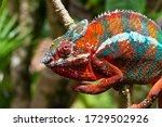 One Colorful Chameleon On A...